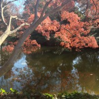 Fort Worth Botanical Gardens iPhone26©JamesECockroft 20140104