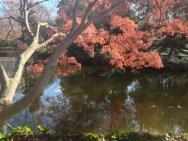 Fort Worth Botanical Gardens iPhone|26|©JamesECockroft-20140104