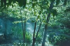 2014-Arboretum, Lake Carolyn, Random|24|©JamesECockroft-20141224