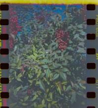 2014-Arboretum, Lake Carolyn, Random|3|©JamesECockroft-20141224