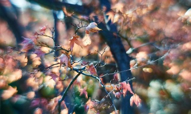 20140104-1152-Fort Worth Botanic Gardens-D700-42-©JamesECockroft-20140104-Capture One