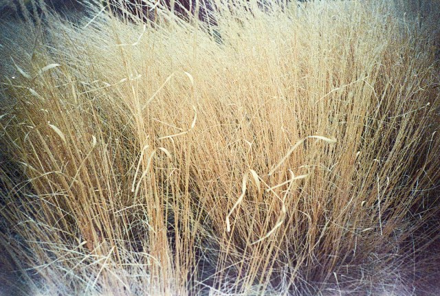Native Grass at 50 ISO