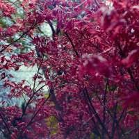 20160319 1307 Dallas Arboretum Neighborhood Walk ©JamesECockroft 3853