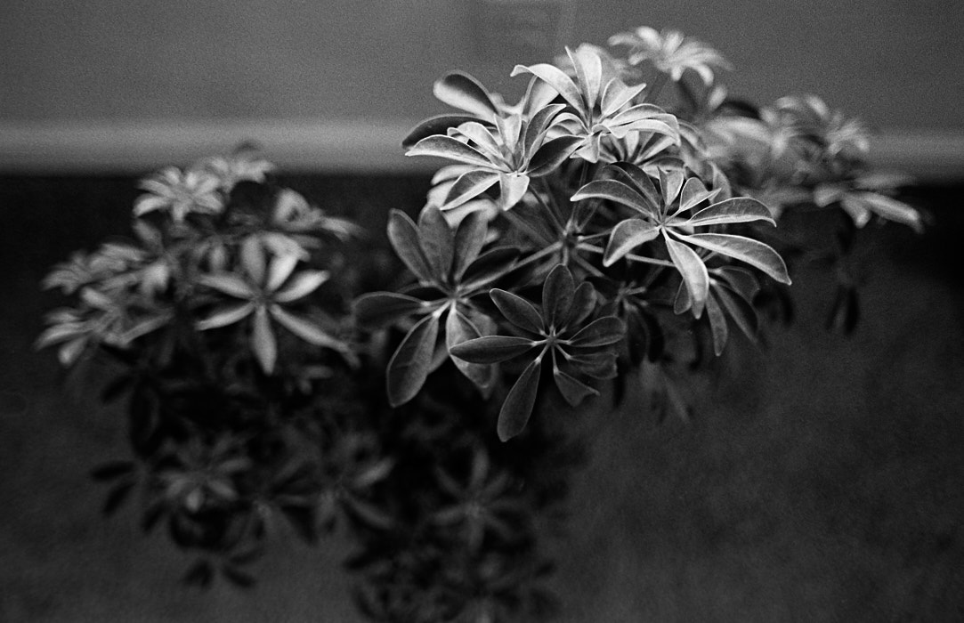 20160430 1359 HP5 Mom visit Random ©JamesECockroft 4893
