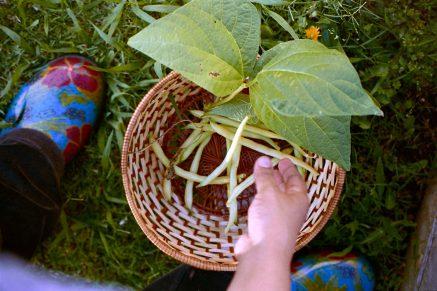 20160530-1019-First Harvest-©JamesECockroft-5374-wife