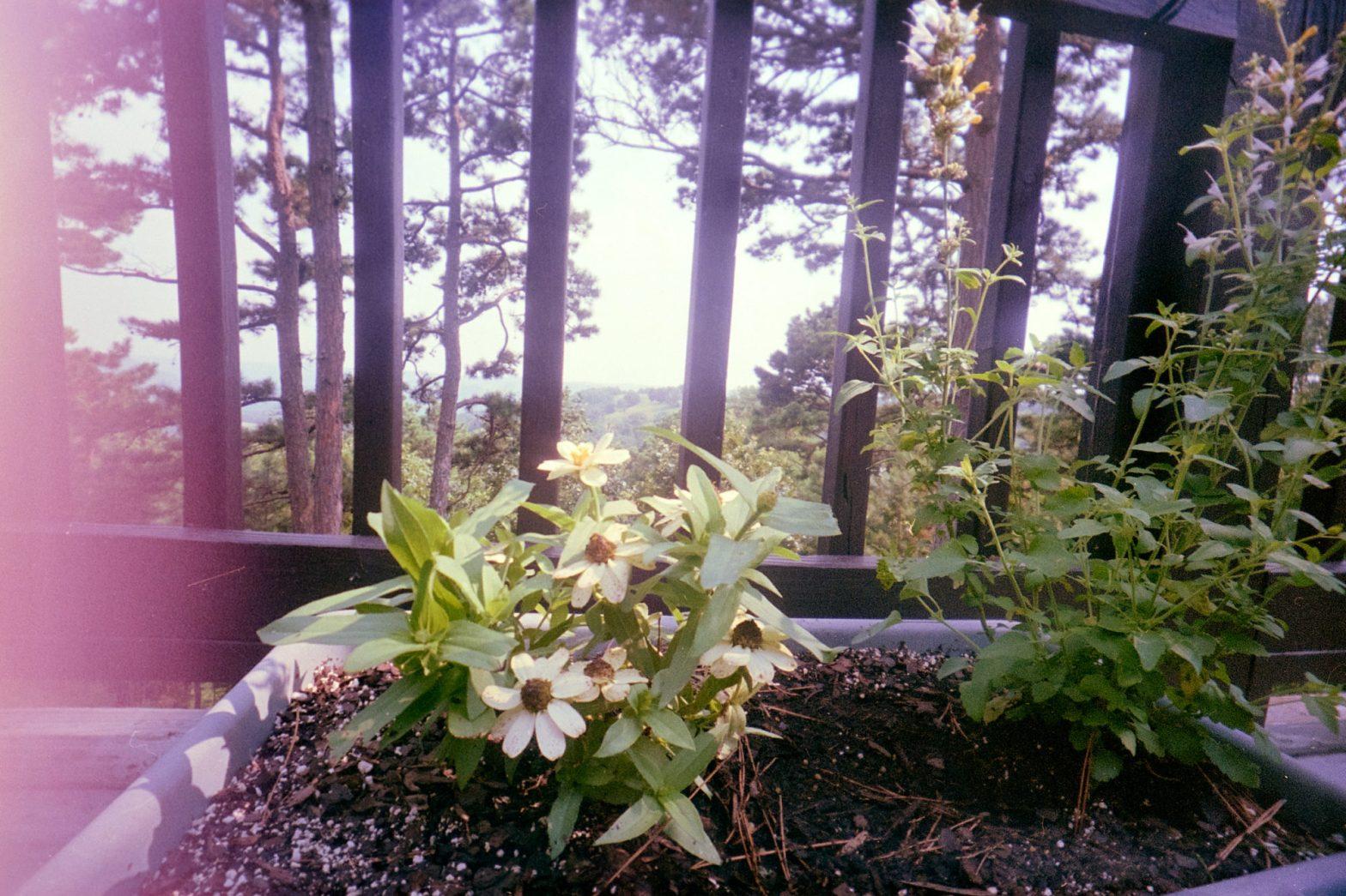 Cover-flowerpot-WaiWai