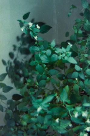 Houseplants 2|©JamesECockroft-20150228