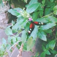 Texas Discovery Gardens40©JamesECockroft 20150404