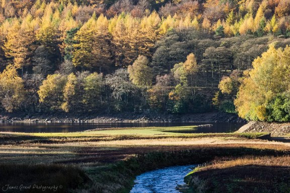 Abbey Brook Larches - Peak District Photography