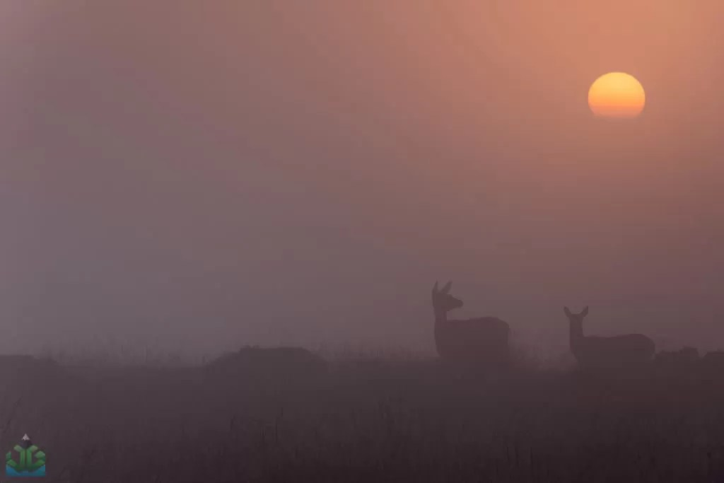 Deers on Curbar Edge - Autumn In The Peak District