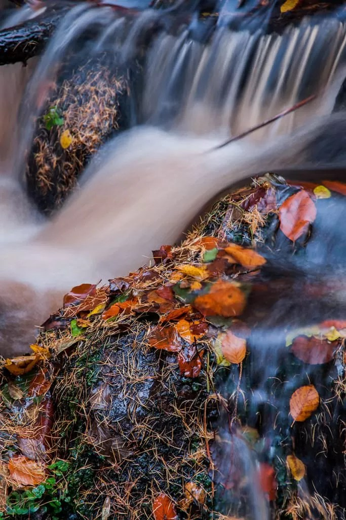Wyming Brook Stream - Autumn in the Peak District