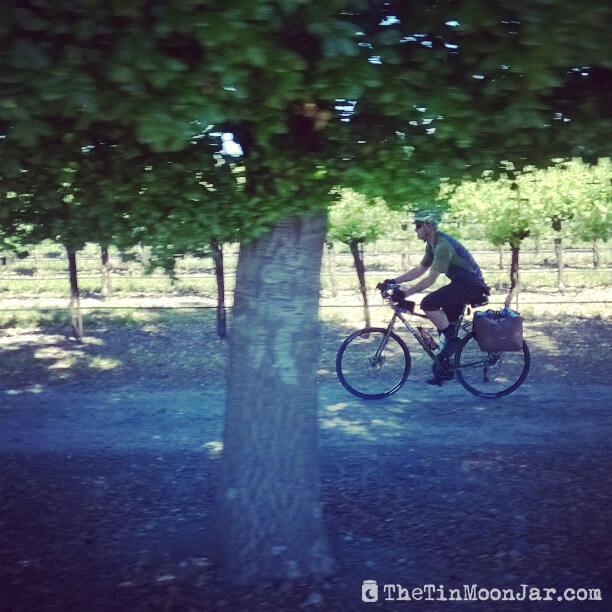Vineyards | Delta Bike Tour | A blog series exploring a two day road bike tour around the Sacramento Delta. Includes route maps and pics. JamieThornton.com #deltabiketour