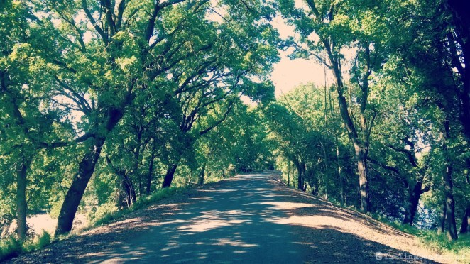 Wakeena Slough Rd with trees | Rio Vista hills | Delta Bike Tour | A blog series exploring a two day road bike tour around the Sacramento Delta. Includes route maps and pics. JamieThornton.com #deltabiketour