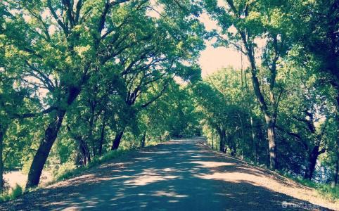 Wakeena Slough Rd with trees   Rio Vista hills   Delta Bike Tour   A blog series exploring a two day road bike tour around the Sacramento Delta. Includes route maps and pics. JamieThornton.com #deltabiketour