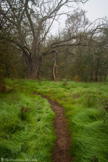 The importance of weather and setting in fiction   A Feast of Weeds   JamieThornton.com #fog