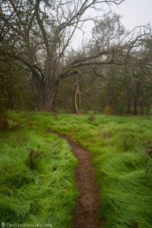 The importance of weather and setting in fiction | A Feast of Weeds | JamieThornton.com #fog