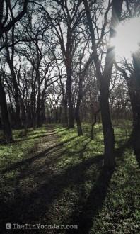 tree-trail-with-sun-spot