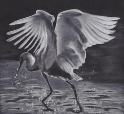 """No Egrets"" - Black and White Charcoal Drawing by Colorado Artist Jamie Wilke - Water Bird"