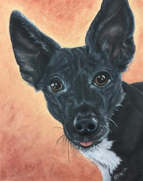 Monkey: Dog Pet Portrait in Pastel by Jamie Wilke