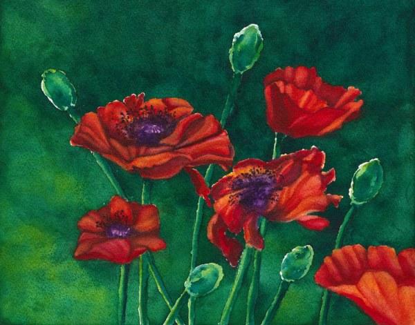 """June's Bloom. Original watercolor by Jamie Wilke. 11x14"""". Red Poppies"""