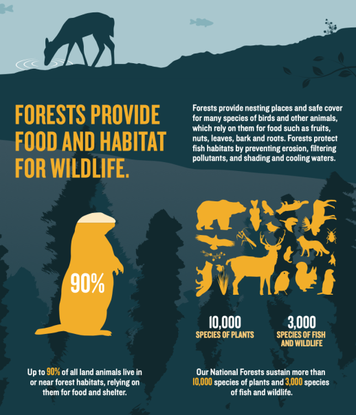 FORESTS PROVIDE FOOD AND HABITAT FOR WILDLIFE
