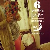 06 weeks pregnant