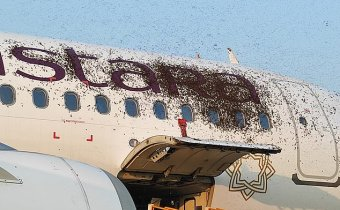 Two passenger planes are grounded hours apart in India after a massive swarm of BEES land on the aircraft 3