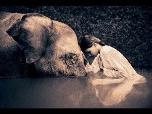 meditation-elephant-girl-connection