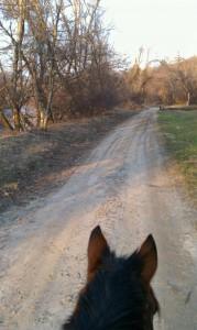 path-horse-ears
