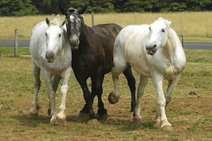 What horses taught me about anger…