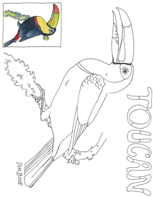 toucan  free coloring pages