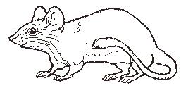 Blank Sun Diagram, Blank, Free Engine Image For User