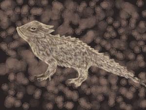 horned-toat-illustration