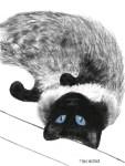 my-marley-cat-Illustration