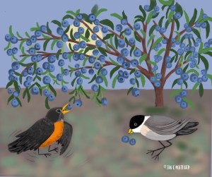 birds-and-berries-illustration