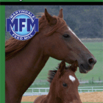 horse feeds-https://www.jandnfeedandseed.com