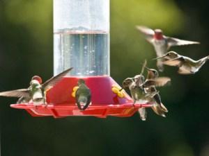 hummingbird nectar recipe-https://www.jandnfeedandseed.com