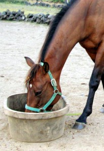 equine care :: J & N Feed and Seed