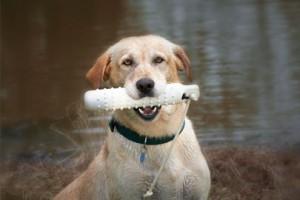 S1-EK9-Work_and_Sport-field_trial_dogs-183