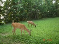 food plot mix