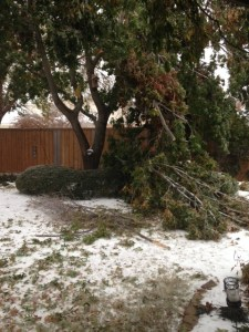 after the storm caring for your trees-https://www.jandnfeedandseed.com