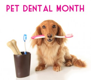 DogWithToothbrush