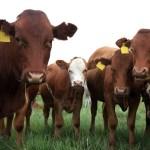 Veterinary Feed Directive