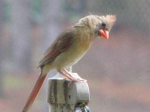 2014 great backyard bird count-https://www.jandnfeedandseed.com