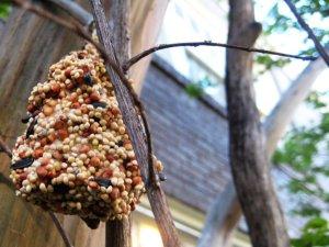peanut butter pinecone for birds-https://www.jandnfeedandseed.com