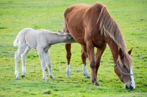 feeding lactating mares-https://www.jandnfeedandseed.com