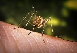 prevent mosquitos- https://www.jandnfeedandseed.com