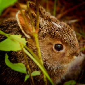 keeping rabbit out of the garden- https://www.jandnfeedandseed.com