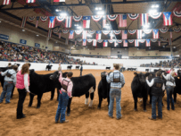 Young County Jr. Livestock Show