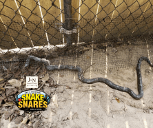 Snake Snare by Eve's Revenge at J&N Feed in Graham, Texas.